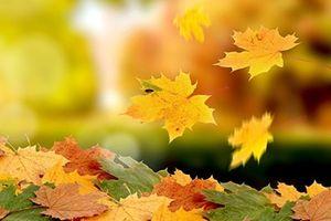 Tìm một nửa mùa thu...